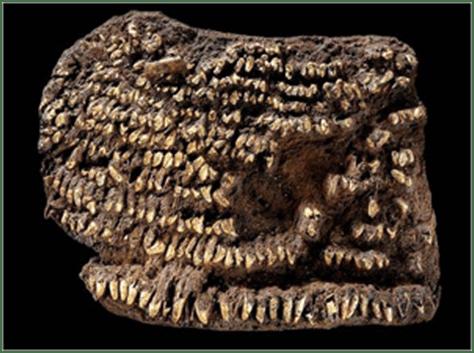El bolso de la prehistoria